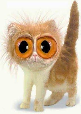 Curiosos e Engraçados: Tô de olho em você
