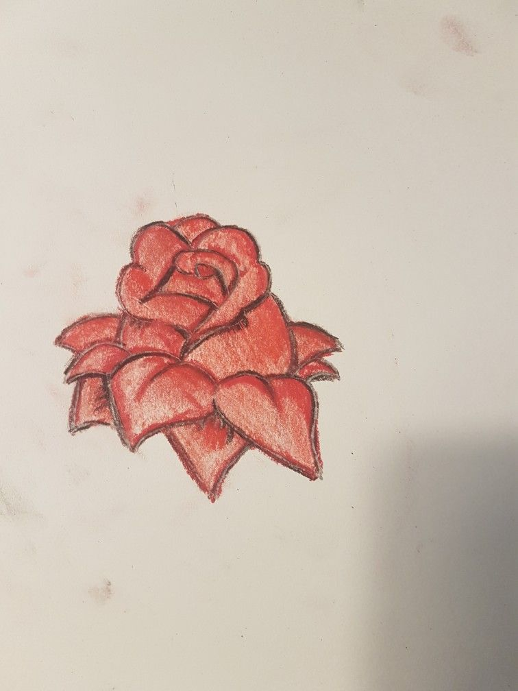 My first rose