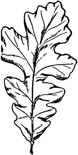 More Simple Oak Leaf