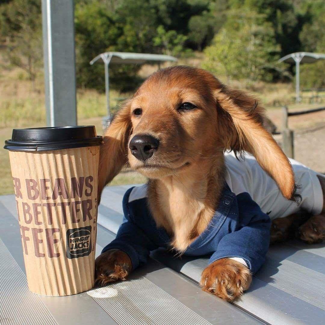Pin By Michelle Aubin On Nothin But Dachs Baby Dogs Weiner Dog