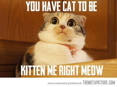 Funny Cat Meme From The Internet Cat Memes Funny Pictures