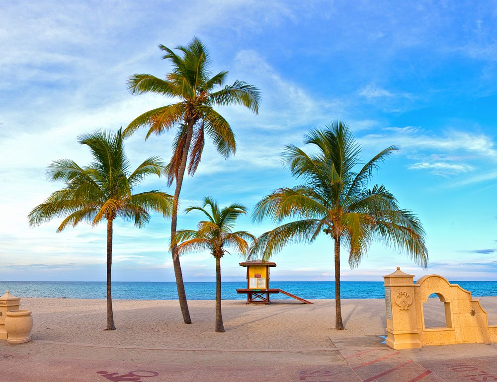 Landscape With Palm Trees On A Beautiful Sunny Summer Afternoon In Hollywood Beach Near Miami Florida Ocean And Blue Sky The Background 作者