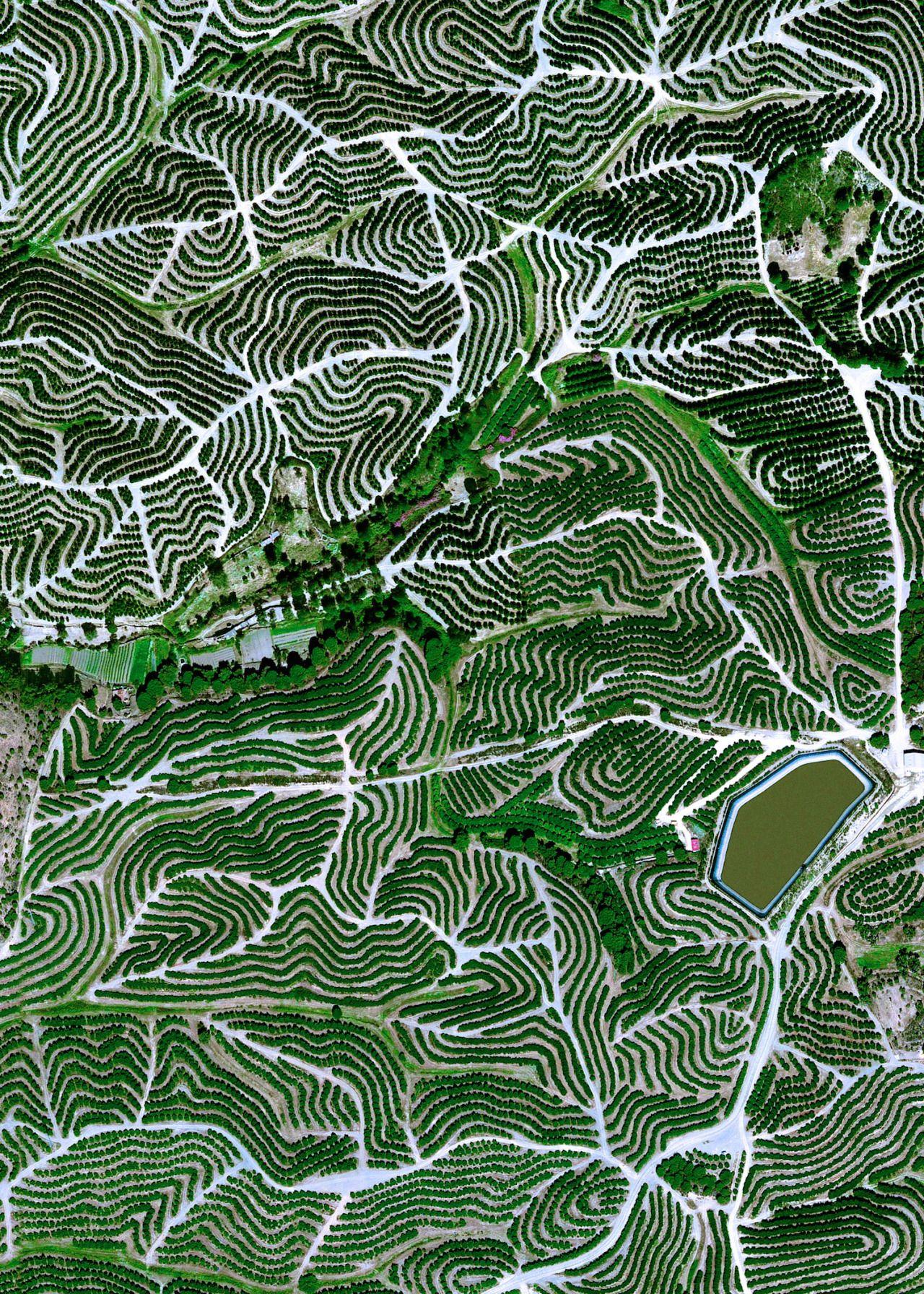 I don't like truth, ...EASTERN design office - belas-imagens: Fruit trees swirl on the hills of...