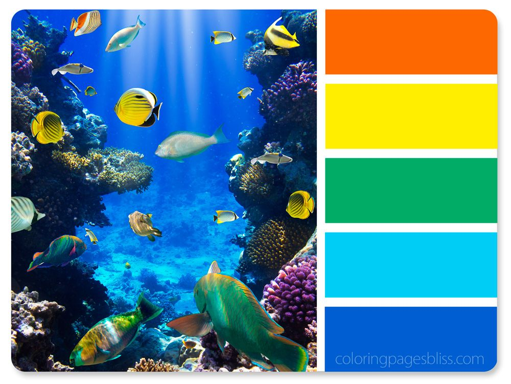 Ocean Life Pictures To Color