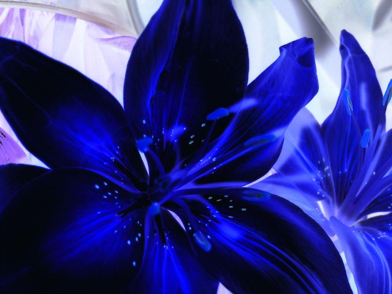 Lilies Bing Images Things I Like Pinterest Blue Blue