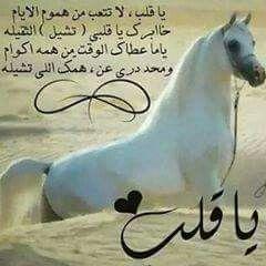 Pin By موووت روووح وردة الجاردينيا On مووت الروح Love Words Horses Qoutes