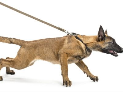 The 5 Best Harnesses To Stop Dogs Pulling On Leash Dog Boarding