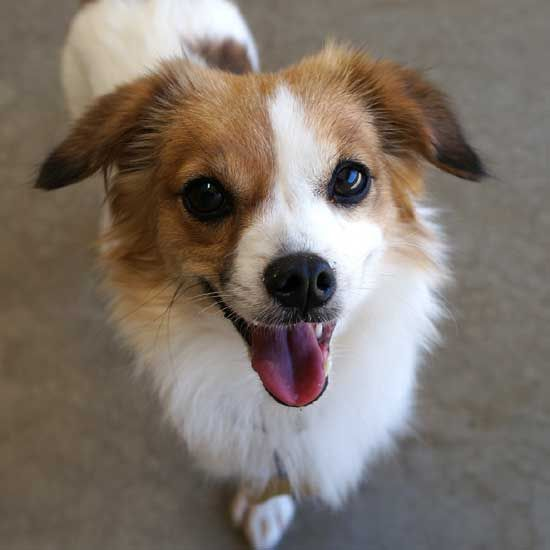 Dog Adoption San Diego Adopt A Dog Cat Adoption San Diego Adopt A Cat Helen Woodward Animal Center Animals Pet Adoption Adoption