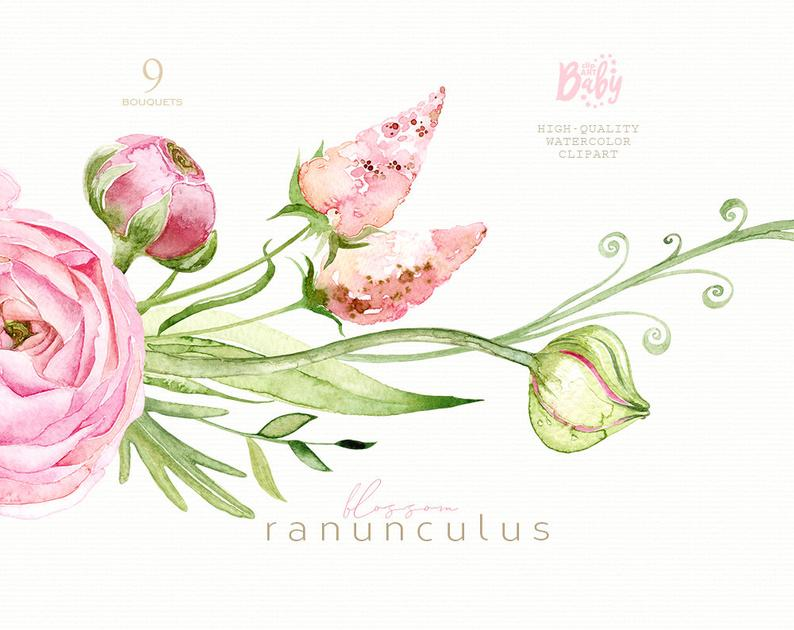 Ranunculus floral clipart, watercolor flowers, babyshower ...