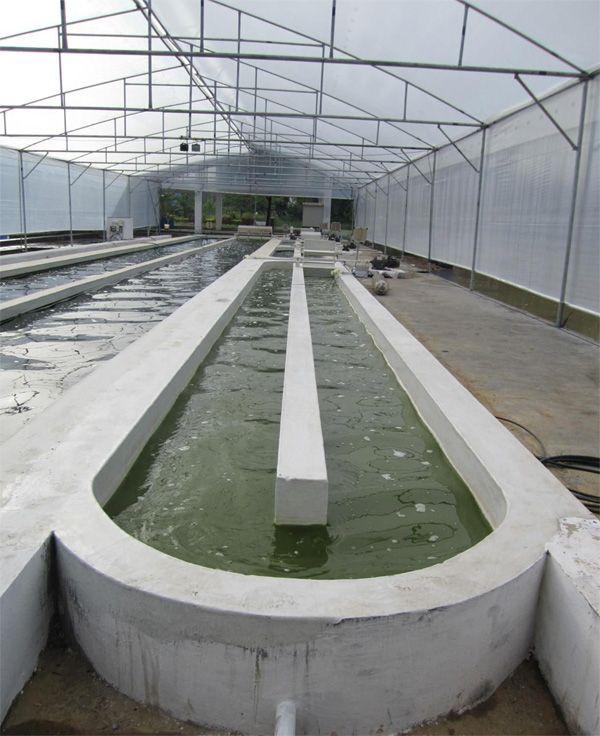Raceway Pond | One 20 m2 concrete FRP lined raceway pond