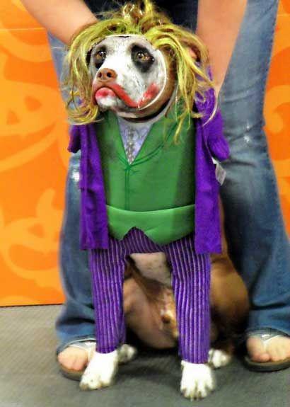 Joker Dog Costumer Google Search Dog Halloween Costumes Diy