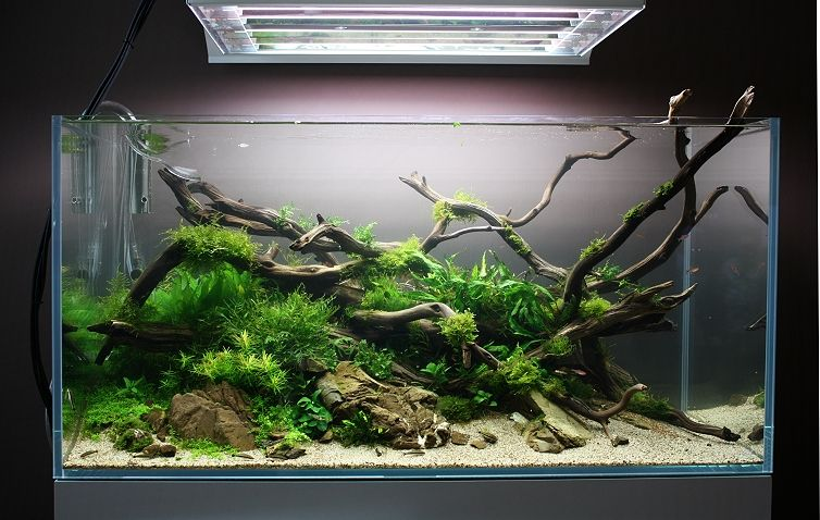 Shallow Brook de Spin0ff. #aquascaping | Aquascape ...