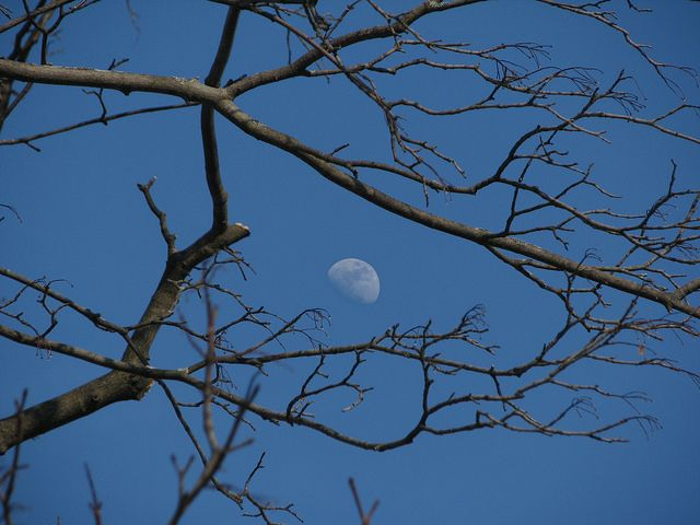 the moon through the tree | Flickr - Photo Sharing!