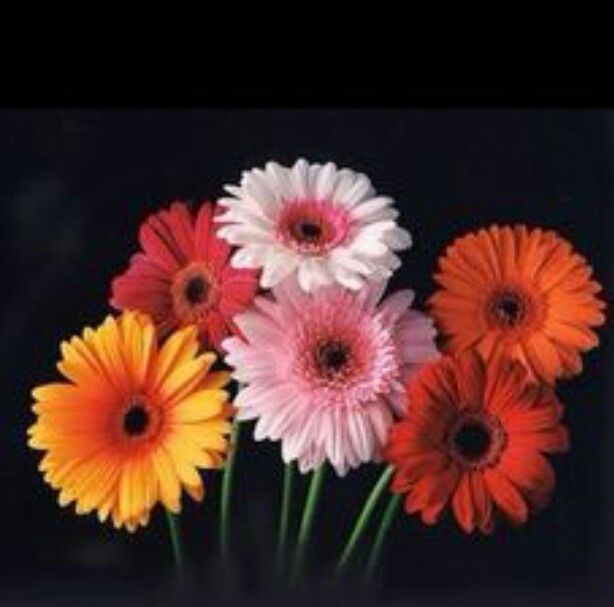Daisy Flower Pictures To Color