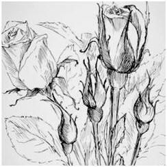 Today's Free Drawing Lessons, Demonstrations, Tips and Techniques: Still Life and Flowers