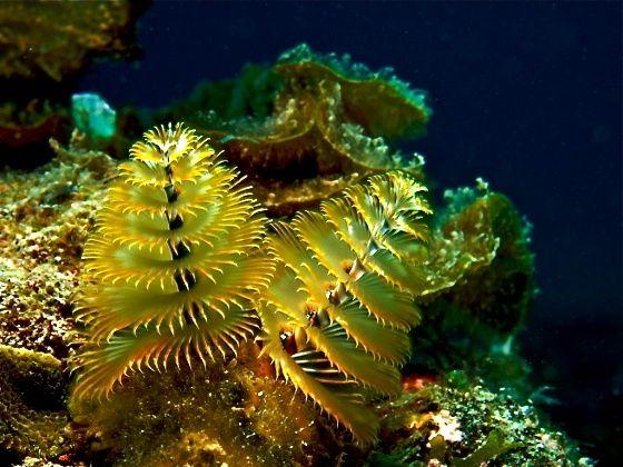 Pinterest Underwater Macro Photography Underwater Ocean Deep