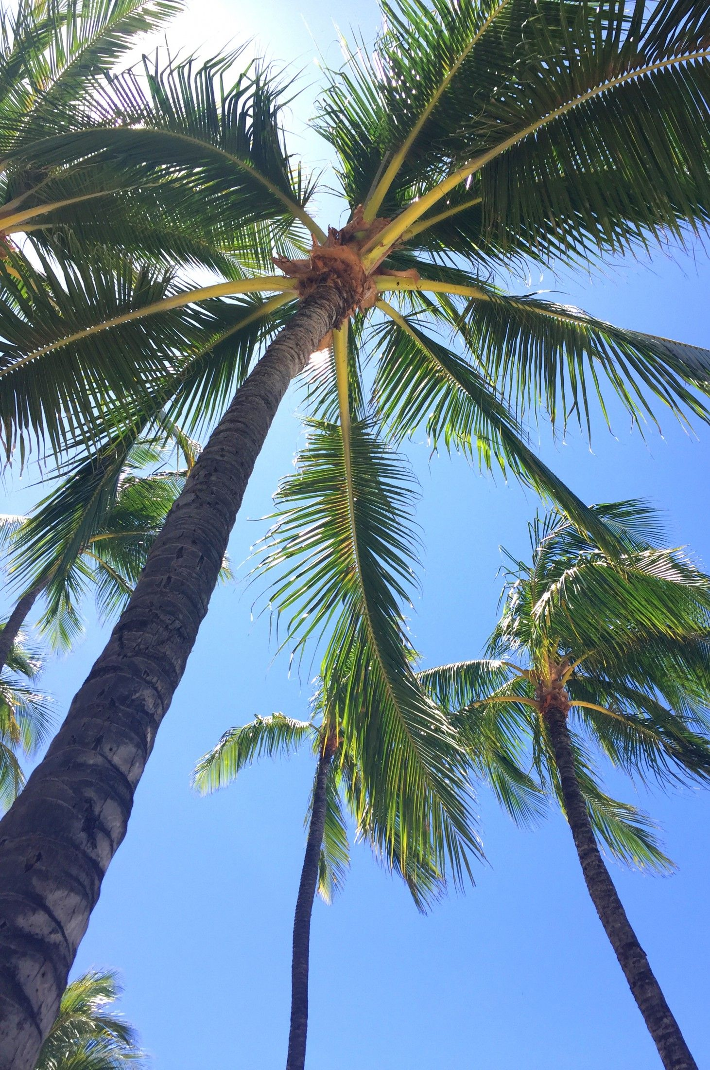 Summer Lifestyle Background Photography Wallpaper Iphone Summer Palm Trees Wallpaper Wallpaper palm trees on blue sky