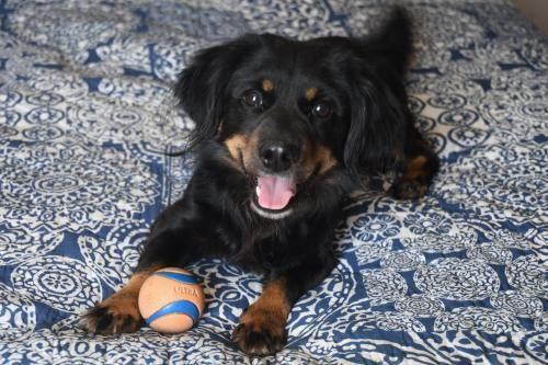 Adopt Kent On Rescue Dogs Dogs Dog Breeds