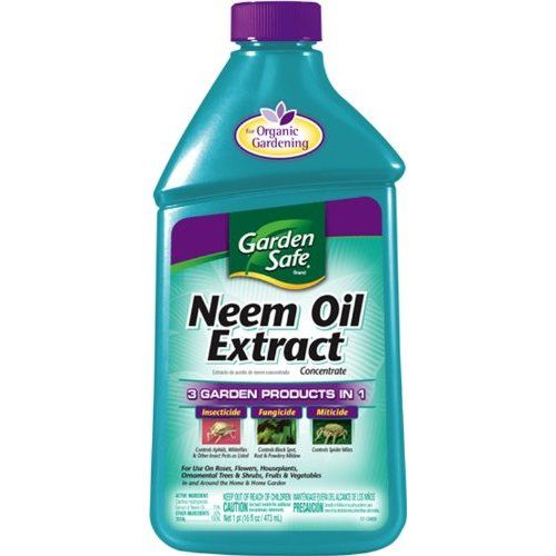 Insect Spray Neem Oil To Make A Quart Of Spray Mix 1 12 Tsp Of