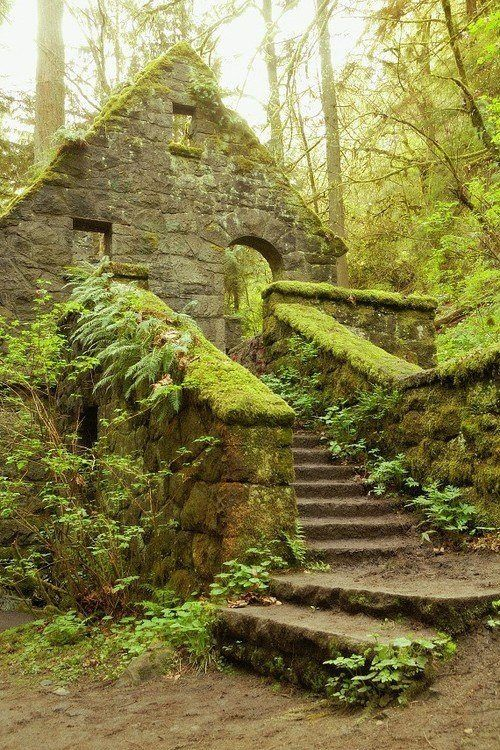 The Stone House is located in Portland's Forest Park, one of the largest urban forested parks in the United States..