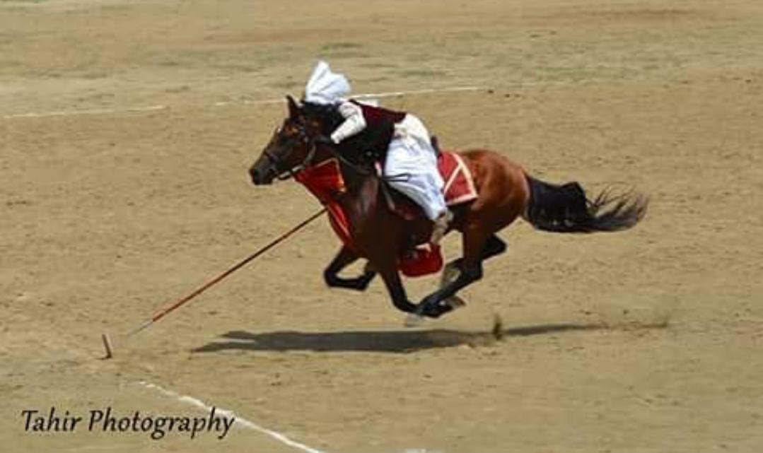 Portuguese Baroque Stirrups Black Stainless Steel Horse Riding Racing Stirrups