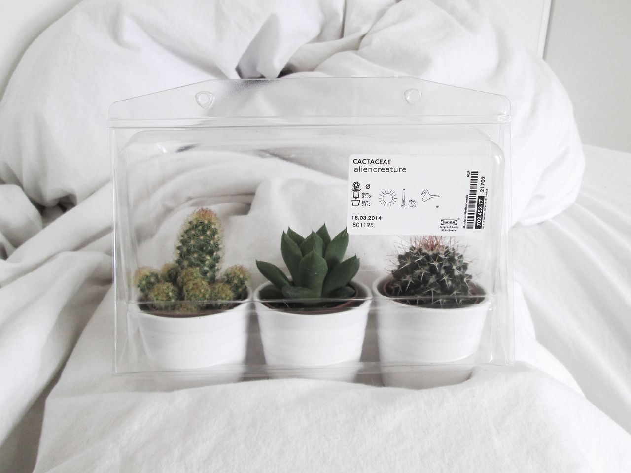 baby succulents from ikea interior pinterest plants cacti and flora. Black Bedroom Furniture Sets. Home Design Ideas