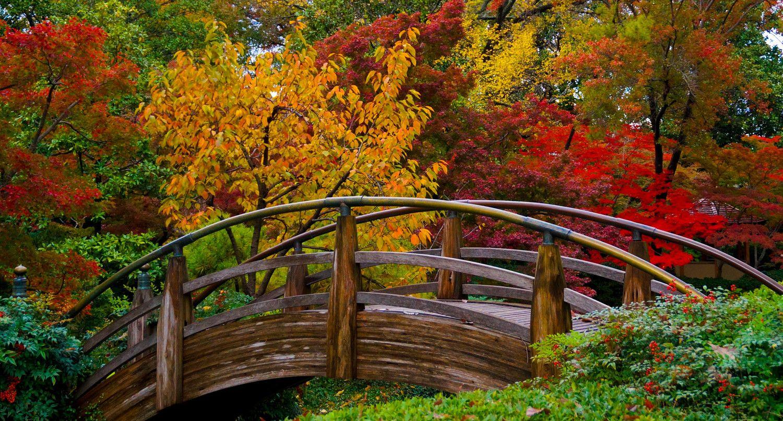 Moon Bridge In The Japanese Gardens Cool Landscapes Beautiful Gardens Japanese Garden