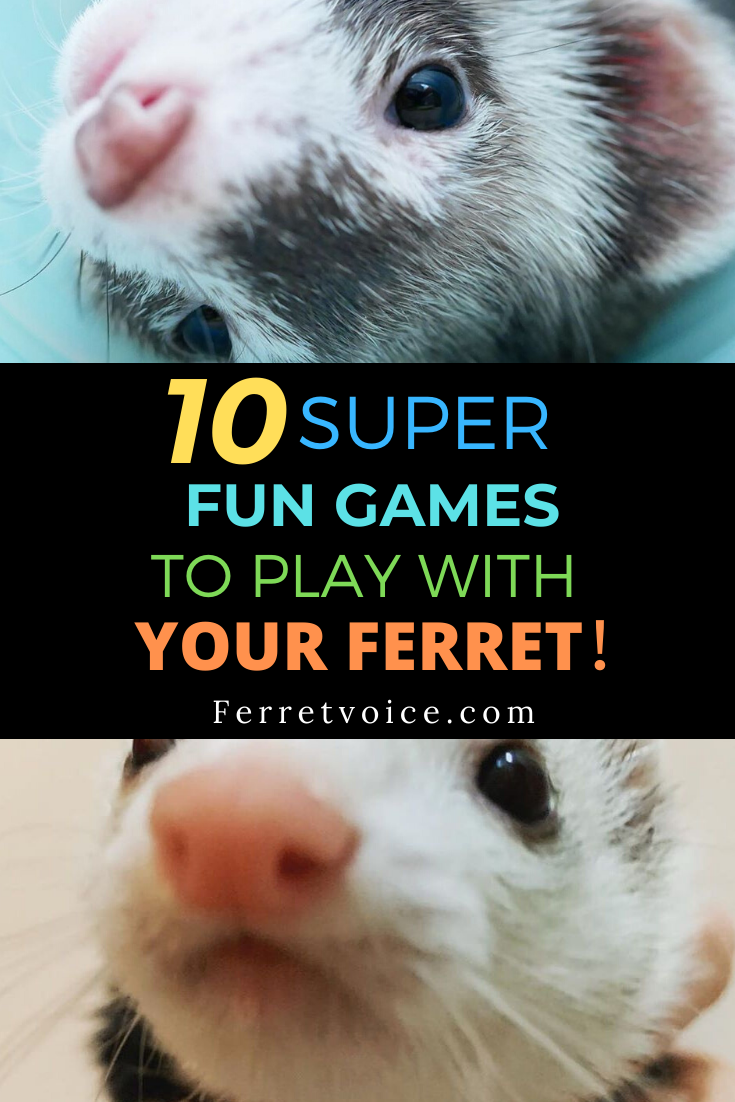 10 Super Fun Games To Play With Your Ferret!