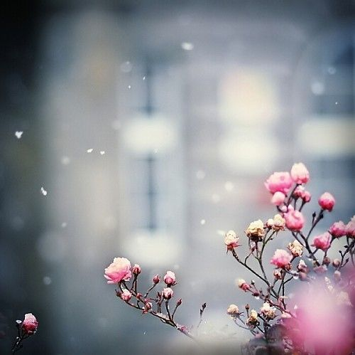 Pink White Winter