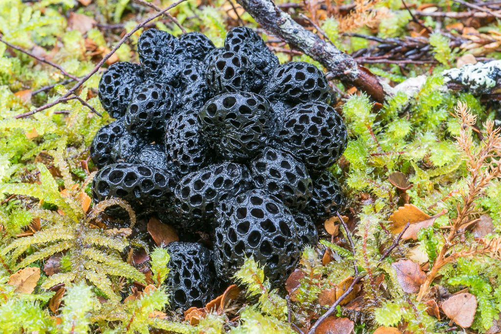 Slime Mould, Wild Mushrooms, Mushroom Fungi, Earth Science, Science Images, Garden  Design, Beautiful Things, Fungi, Mushrooms