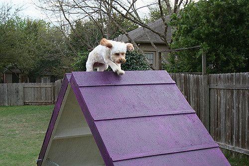 Building A Dog Agility A Frame Dog Agility Dog Agility