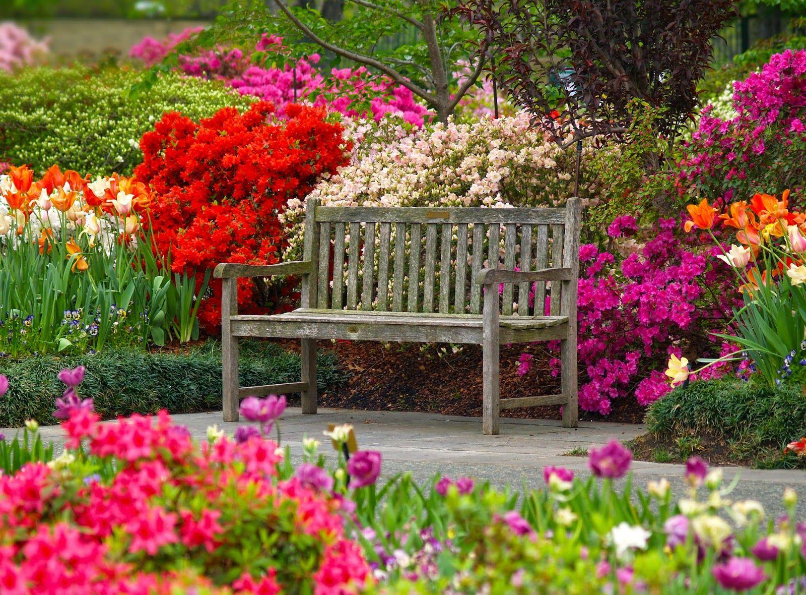 the french tangerine: ~ dallas blooms @ dallas arboretum | spring