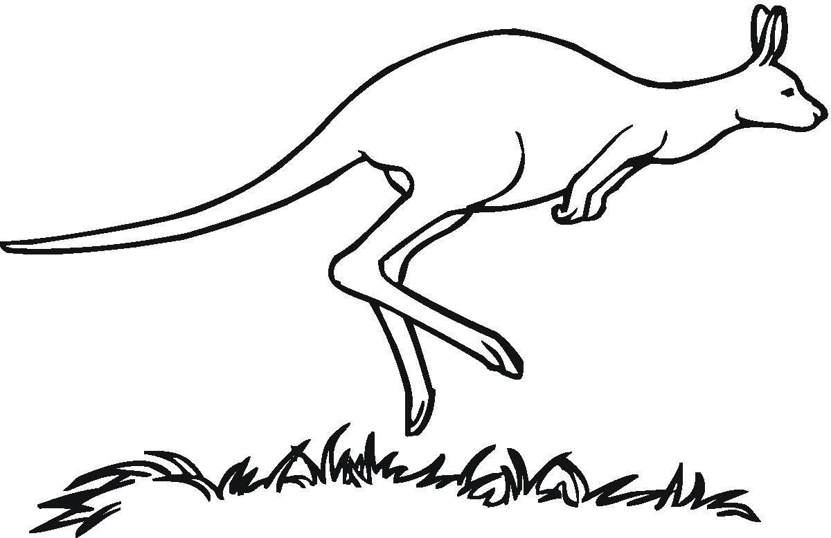 Kangaroo Coloring Pages 05