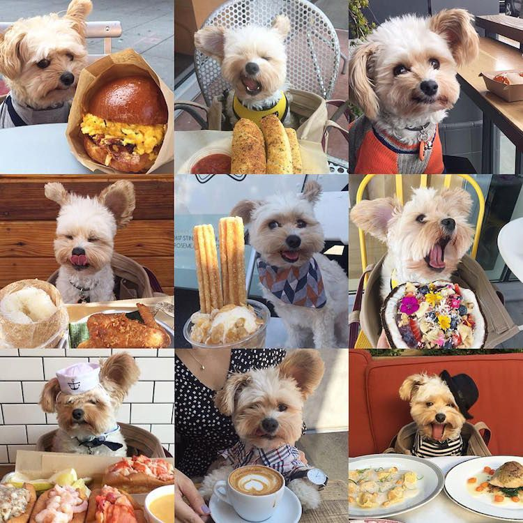 Stray Dog Turns Foodie At Pet Friendly Restaurants With Images Cute Animal Photos