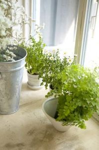 How to Plant a Cheap Container Garden is part of Cheap Container garden - When money is tight, growing your own herbs, vegetables and brightly colored flowers seems like an ideal solution  Frugal gardeners, though, often discover that the cumulative