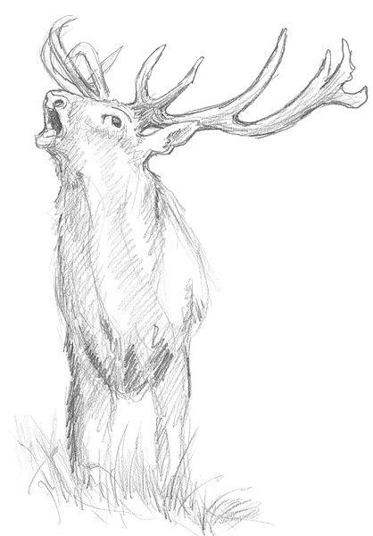Tiere Zeichnen Grundlagen Zeichnen Pinterest Tiere Zeichnen