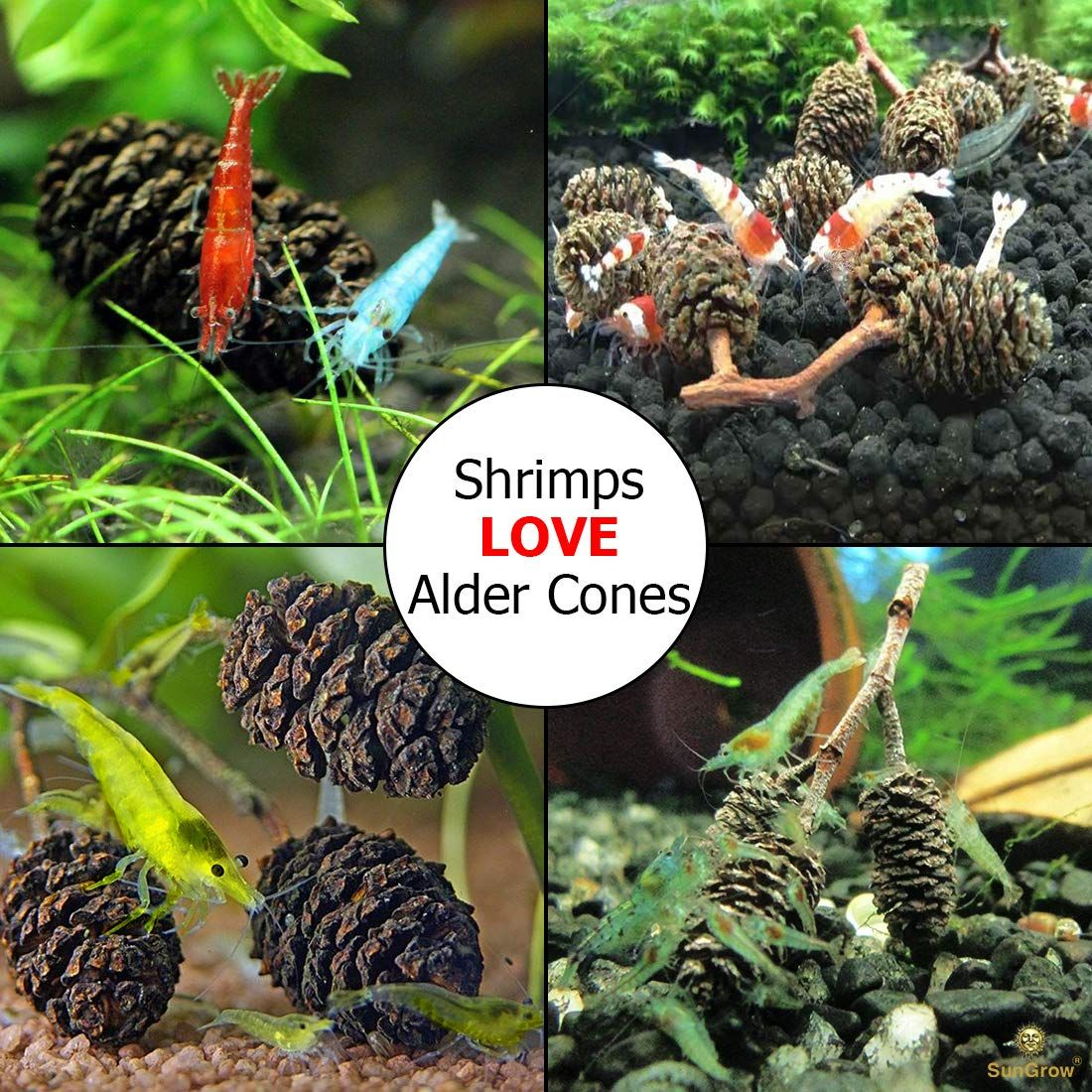 fresh water aquarium shrimp Alder Cones for Shrimps ...