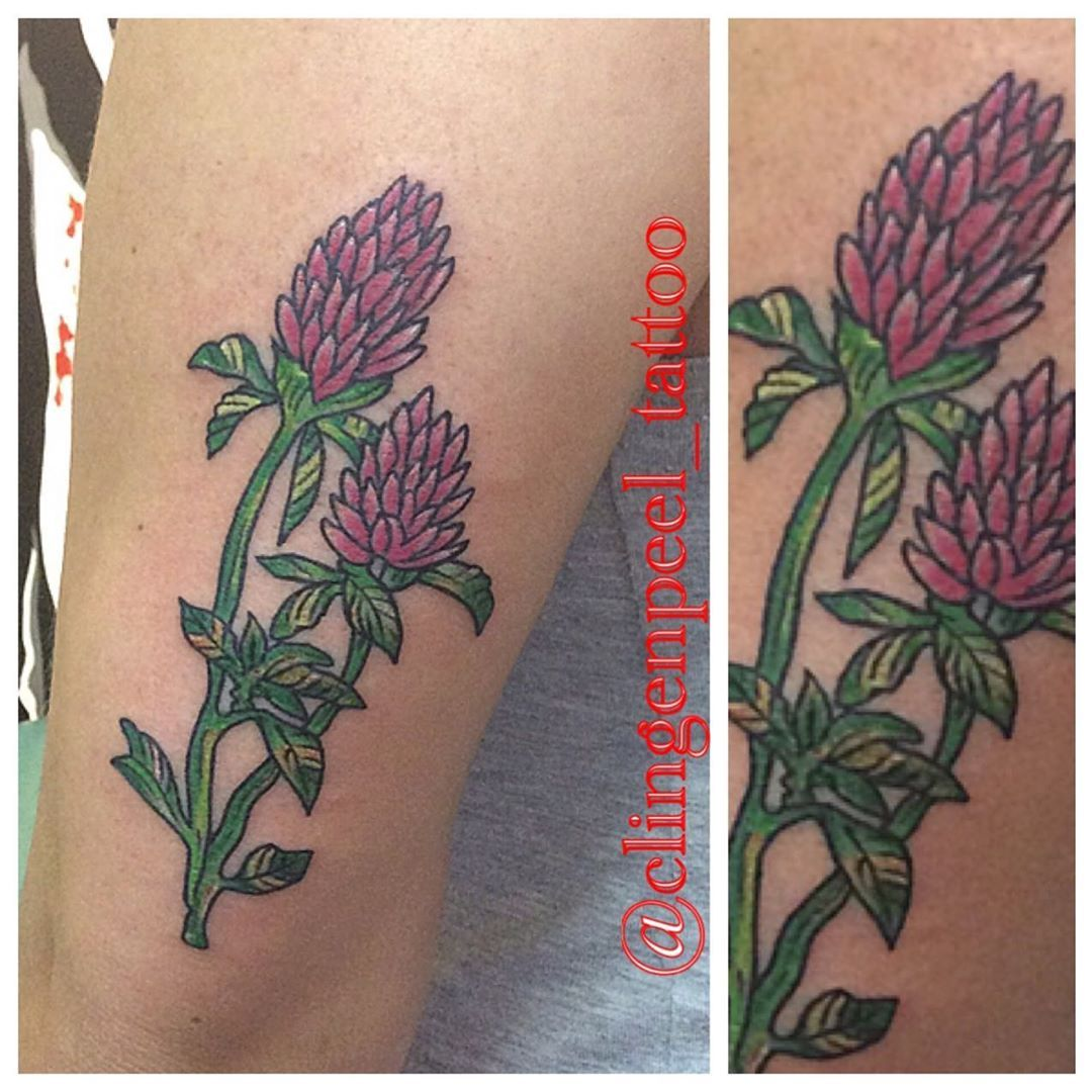 Some Red Clovers For Elizha Lizhakay Thank You For Looking