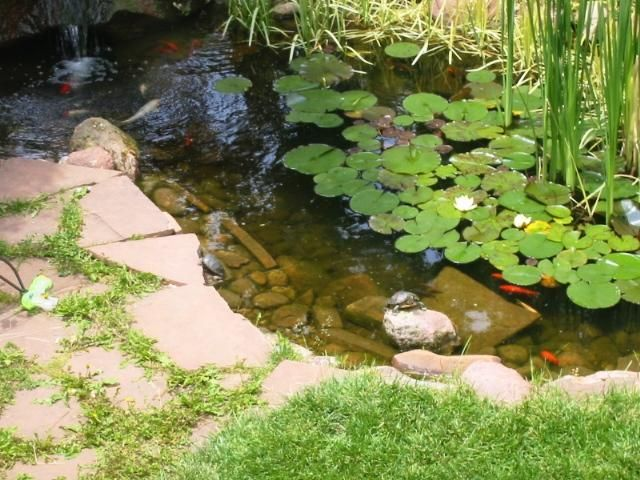 Habitat Guidelines Outdoor Ponds For Aquatic Turtles Colorado Reptile Humane Society Ted