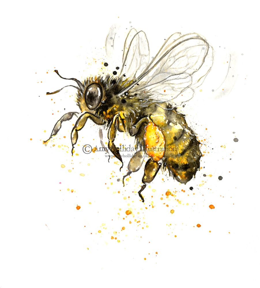 Amy Holliday Illustration Personal Manuka Flower And Honey Bee