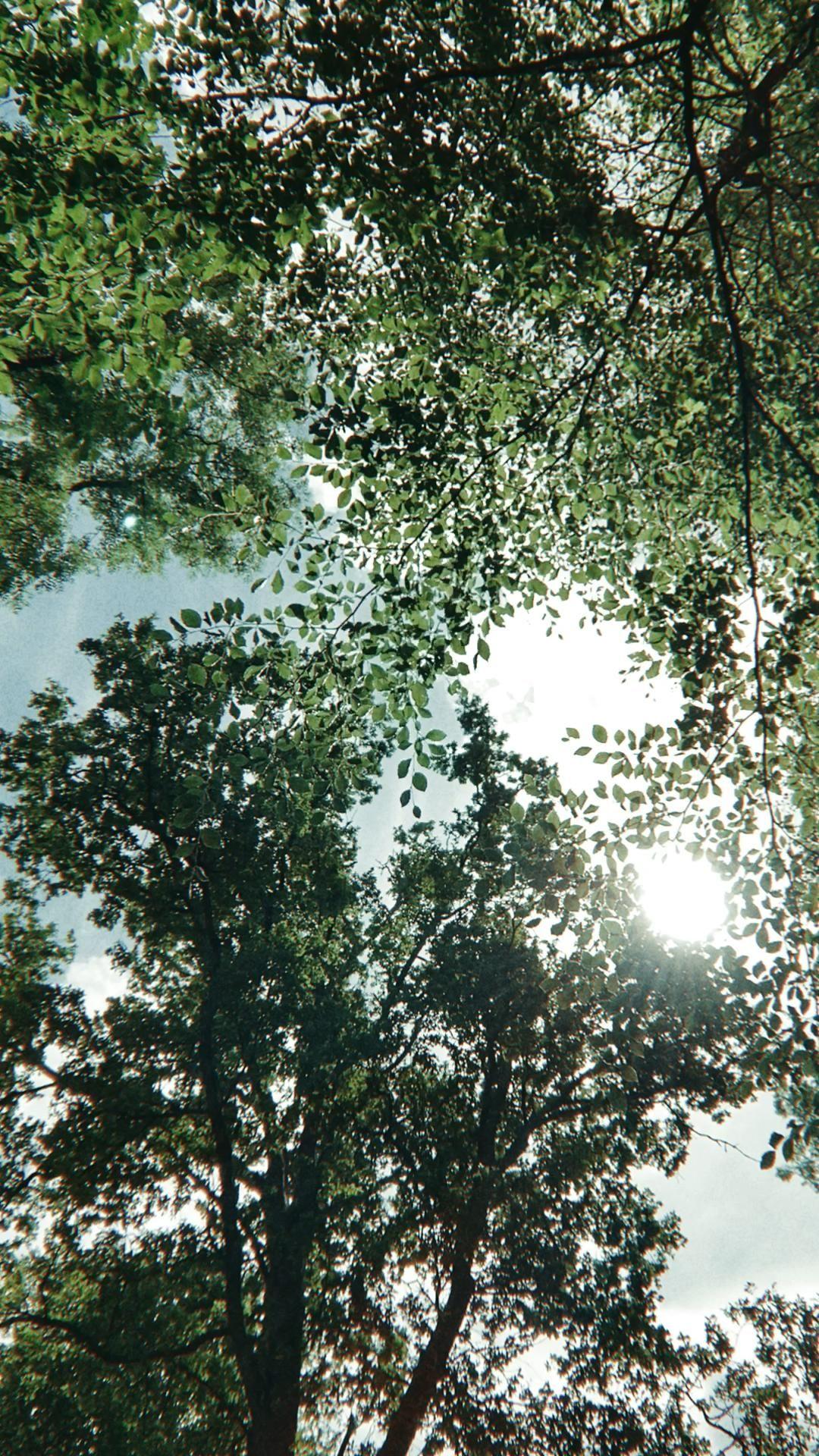 Treetops - Watlington UK