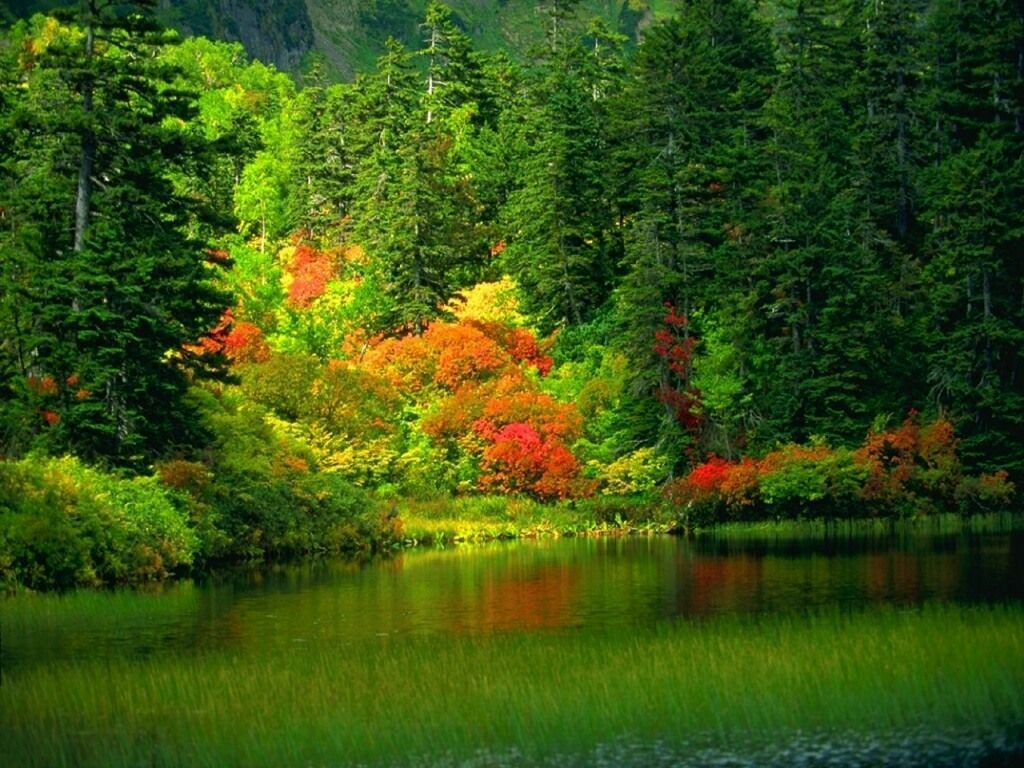 beautiful scenery pictures   Trees Scenery Backgrounds , here you ...