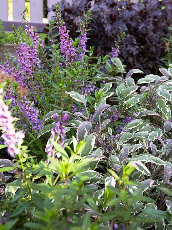 Exquisite purple and white flower combinations for your garden exquisite purple and white flower combinations for your garden plant combinations pinterest herbs herbs garden and gardens mightylinksfo