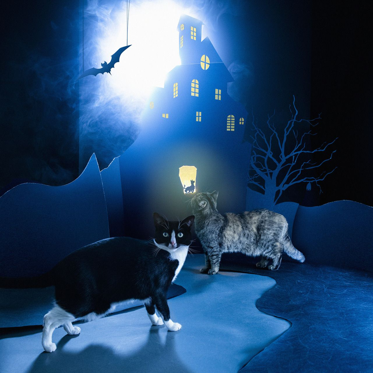 Don't be a scaredycat! 👻 Cats, Character, Fictional