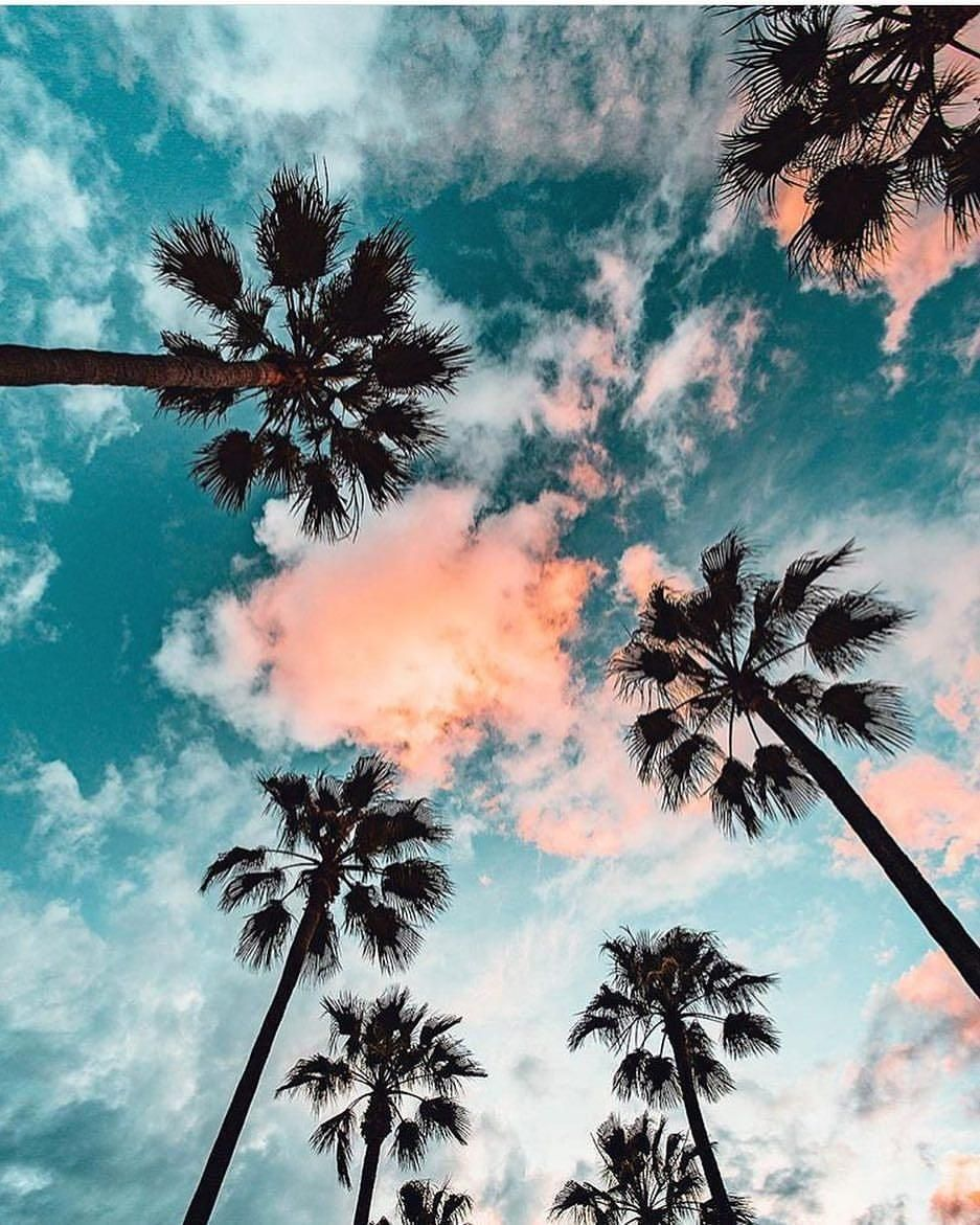 Palm Tree Iphone Wallpaper: Pin By Adriana Reyes On Wallpaper In 2019