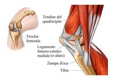 tendinitis biceps femoral rodilla