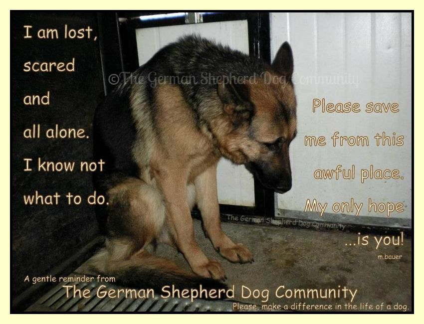 It Breaks My Heart To See Dogs At The Shelter Or On The Streets