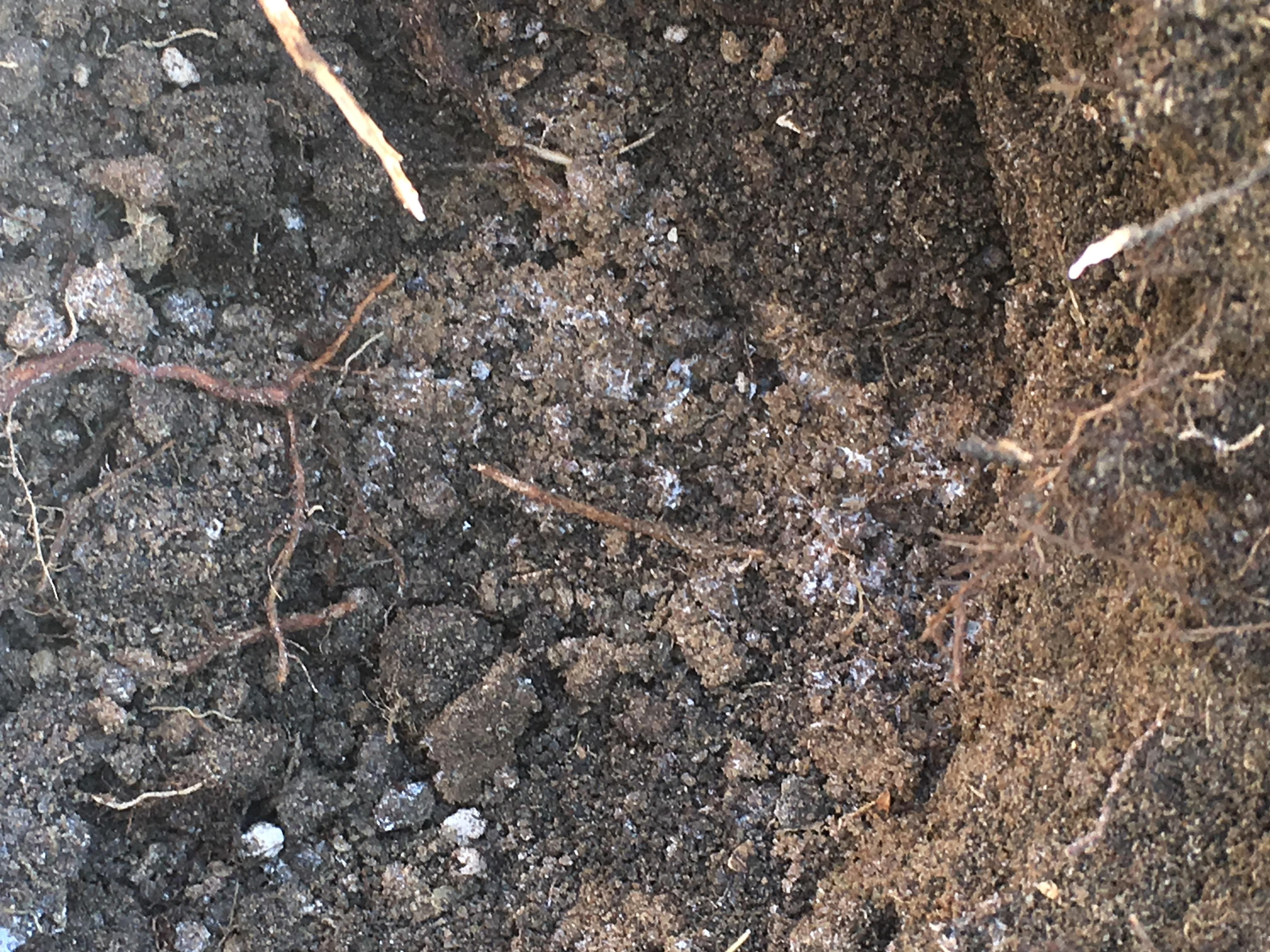 What is this white substance in the soil gardening for What substances are in soil