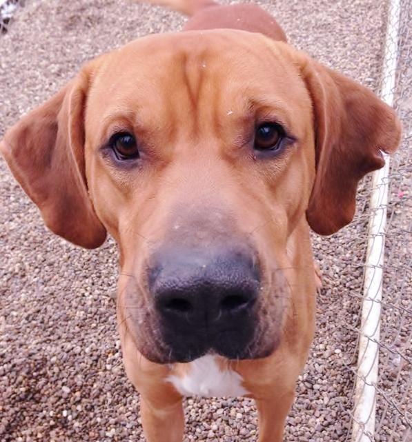 Dog Rescue Marion County Florida