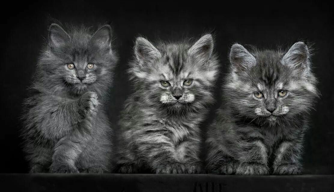 If you are a 'cat' person,  you must see this gallery by RobertSijka http://www.viewbug.com/member/robertsijka